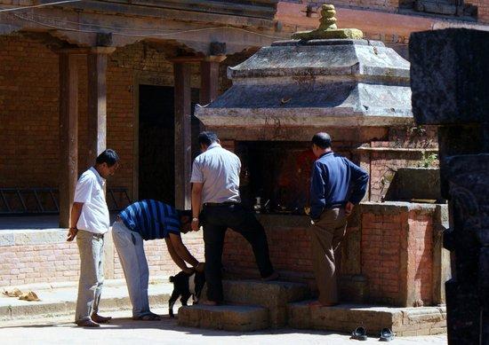 Changu Narayan: le sacrifice...