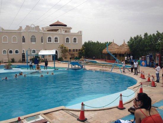Plaza Safari Excursions: после шоу дельфинов