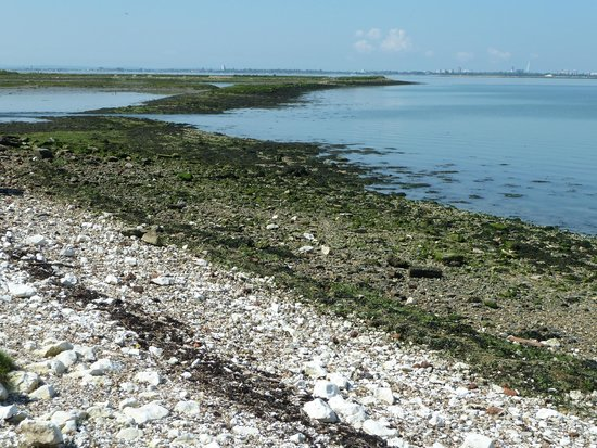 Eastoke Corner Beach: The remains of the oyster beds on the Puffing billy railway walk. Thoosands of sea birds nesting