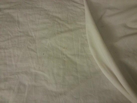 Quality Inn East: Ants and dirty sheets