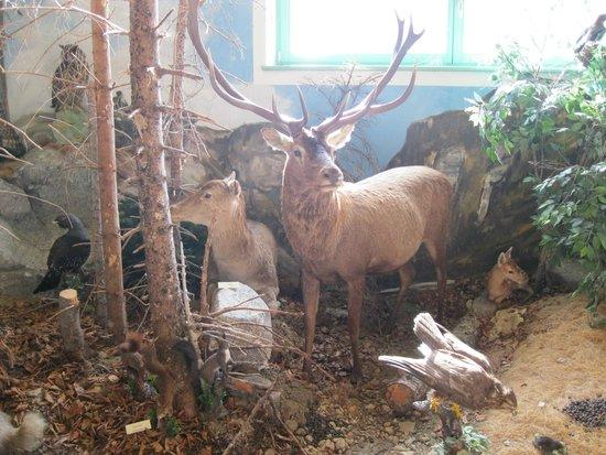 Centro Permanente Della Flora e Della Fauna Alpina
