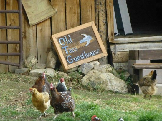 Old Taos Guesthouse B&B: chickens