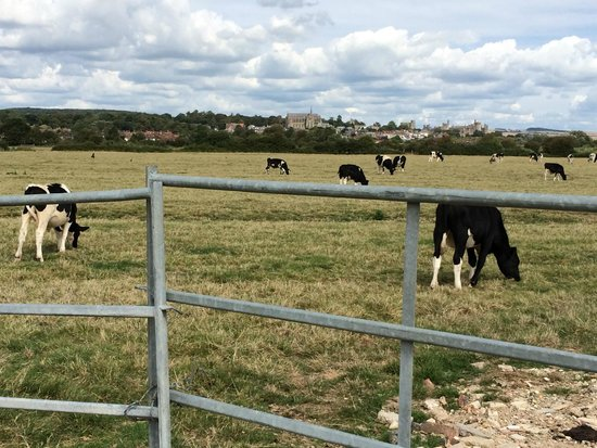 Billycan Camping: View of Arundel from the entrance gate/adjacent cow pasture