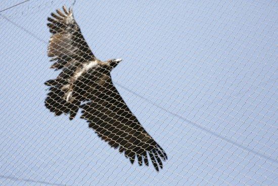 Beijing Zoo: Bird of prey in flight - 2014