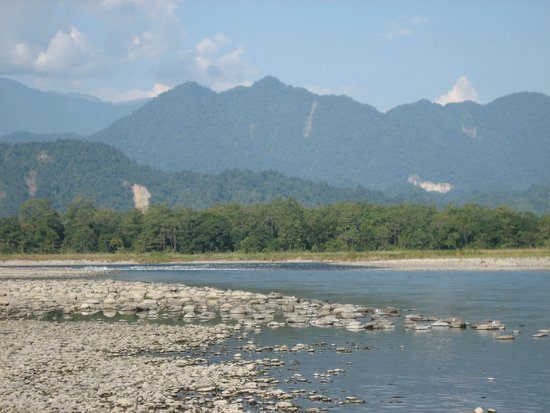 Wild Mahseer: Nearby Jia Bhorelli River