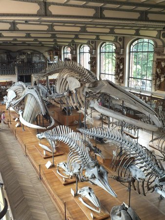 Jardin des Plantes : Cetacei