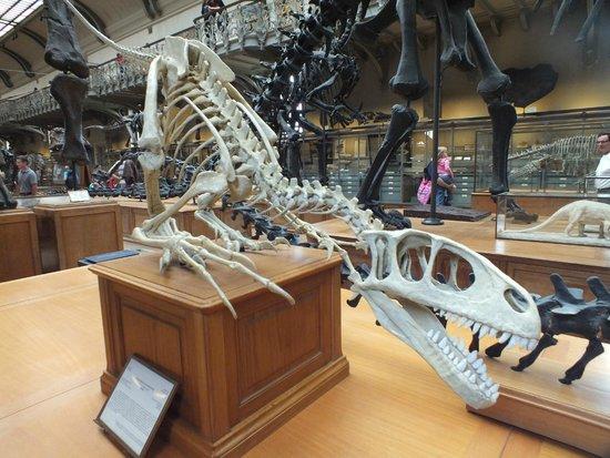 Jardin des Plantes : Dinosauro