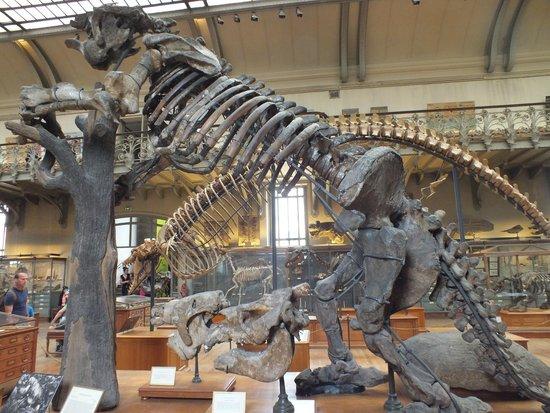 Jardin des Plantes : Megatherium