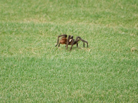 La Paloma Country Club: Unexpected guests sharing the fairways.