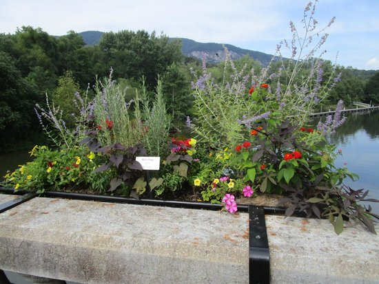 Lake Lure Flowering Bridge - a place of unique and interesting plants