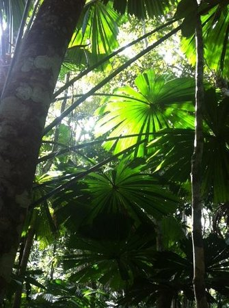Trek North Safaris - Day Tours: Daintree Rainforest Guided Walk