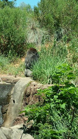 Riverbanks Zoo and Botanical Garden : Was sulking