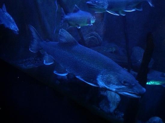 Aquarium du Quebec : aout 2014