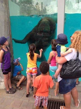 Aquarium du Quebec : '