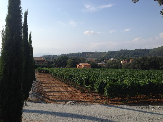 Aborigens -Local Food Insiders: Winery in Catalonia