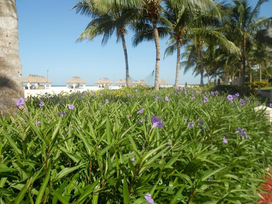 Marco Island Marriott Beach Resort, Golf Club & Spa : Beautiful flora