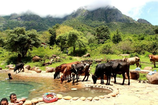 Jungle Retreat: Pool that doubles up as watering hole for animals - Co-existence!