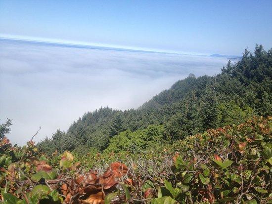 Samuel H. Boardman State Scenic Corridor : Fog over Ocean
