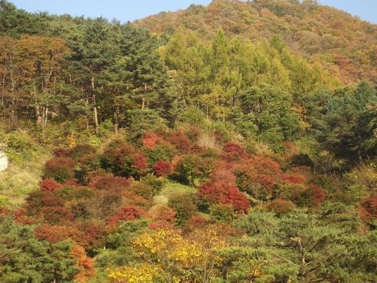 Mungyeong, Güney Kore: Mountain drive way Autumn view
