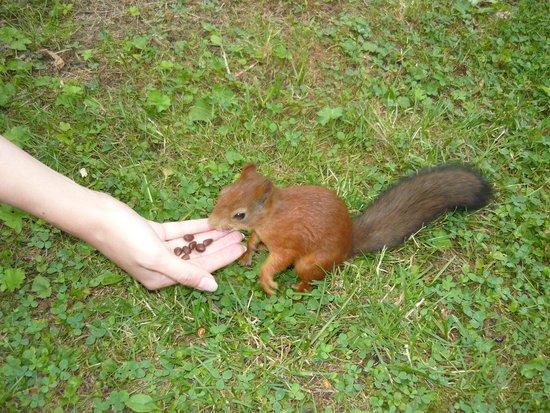 Елагин остров: белочки едят с рук в парке на Елагином острове
