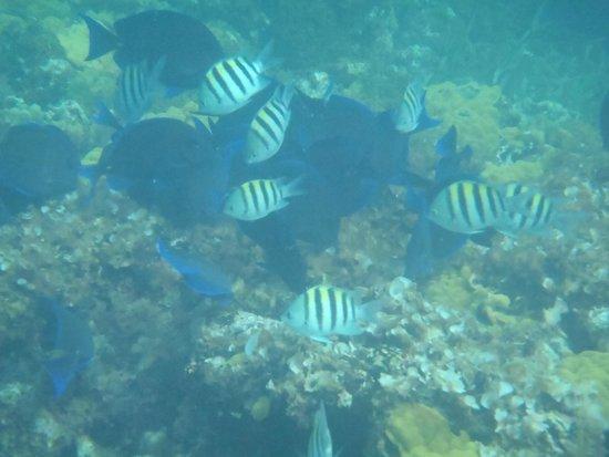 Atlantic Ocean Beach Villas: School of colorful fish