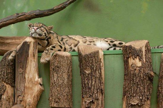 Prager Zoo: Sleeping