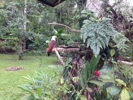 Malagos Garden Resort: Cute
