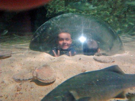 Aquarium Marin De Tregastel : Toujours un plaisir pour les enfants de passer dans la bulle.