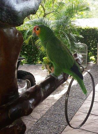 Hotel Villa Mercedes Palenque: Ingresso