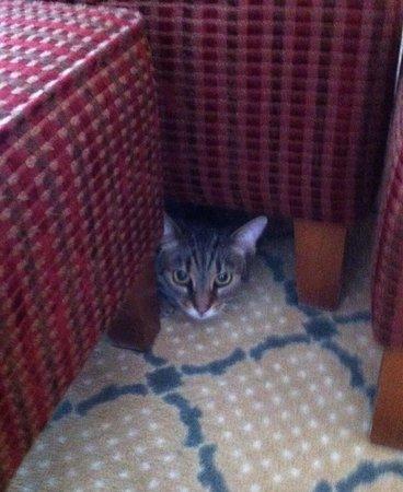 A kismacskám a fotel alatt.:)