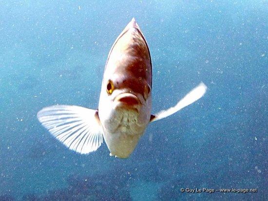 "Underwater Observatory Marine Park : ""Bienvenue"""