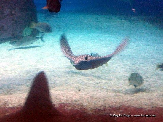 Underwater Observatory Marine Park : L'observatoire présente également de beaux spécimens en aquarium