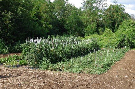 Agriturismo Colbadia: L'orto di Maurizio