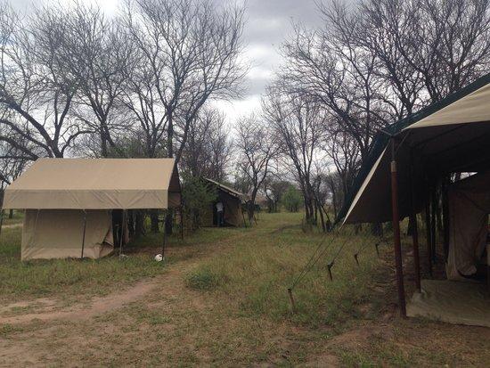 Olakira Camp, Asilia Africa: Perfect location
