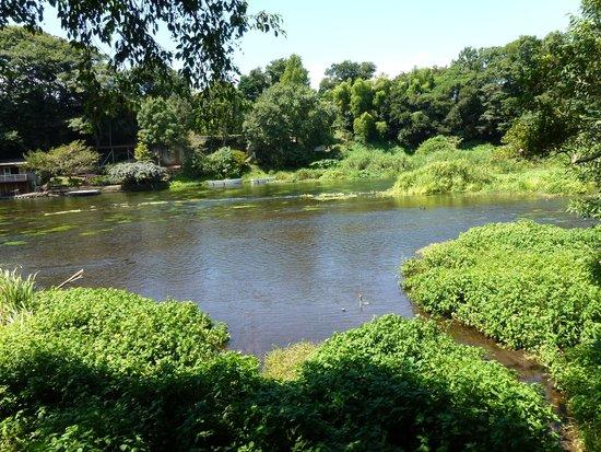 Kakitagawa Park: 川の流れ