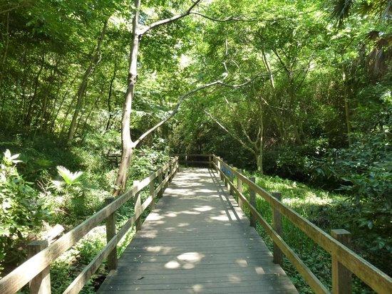 Kakitagawa Park: 散策路