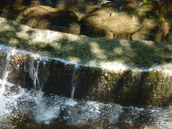 Kakitagawa Park: 湧水2