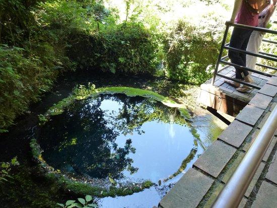 Kakitagawa Park: 湧水3