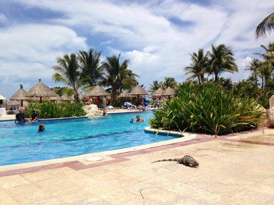 Grand Bahia Principe Tulum : Iguana in vacanza :)