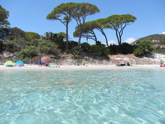 Les pins parasol de Palombaggia - Picture of Plage de Palombaggia ... eeeabfb49d9