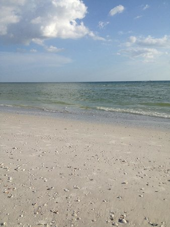 South Seas Towers Condominiums: Beautiful beach and lots of shells