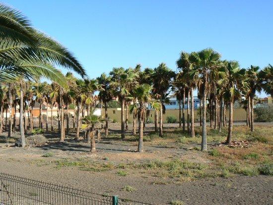 Playa Park Club: vue du balcon derriere
