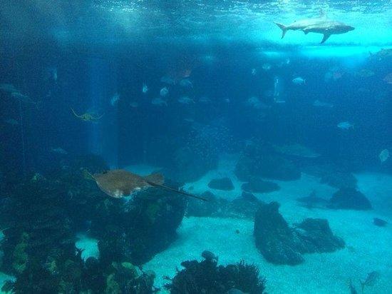 Lisbon Oceanarium : huge aquarium