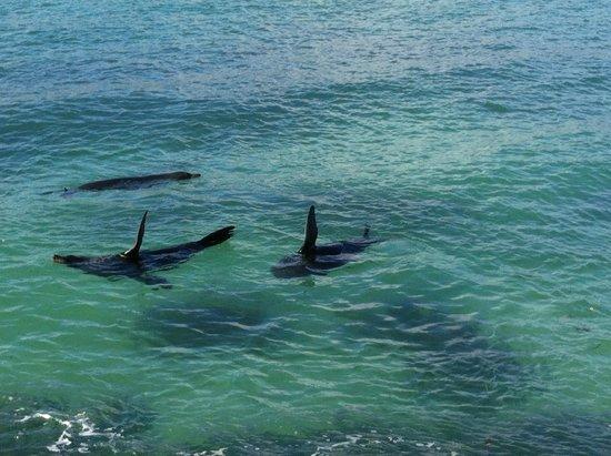 Kangaroo Island Odysseys : meraviglie mattiniere