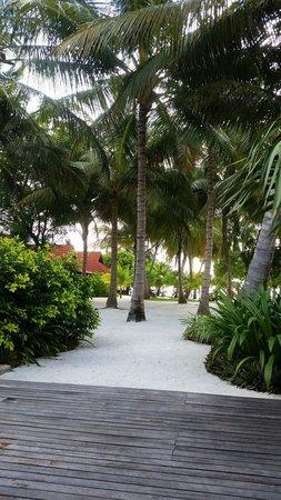 Kurumba Maldives: Coconut