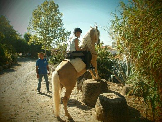 Horta da Moura - Hotel Rural: Horta da Moura e seus cavalos