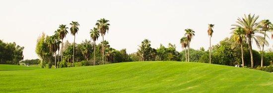 JA Palm Tree Court: The Golf Course