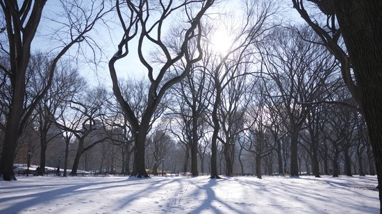 Real New York Tours: The amazing Central park in winter