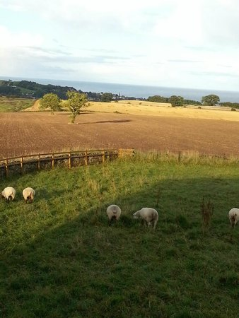 Bilton Barns: A room with a view