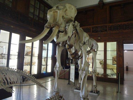 Centro Musei delle Scienze Naturali